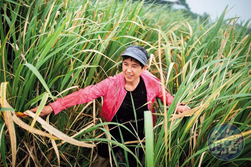 待秋天的筊白筍收成後,寇延丁告別這片心愛的土地,回到中國。