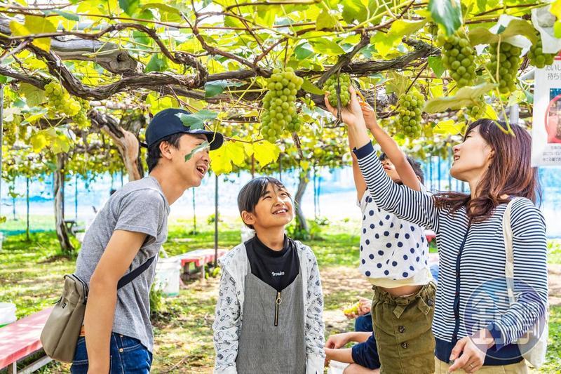「王將果樹園」的採果活動,十分受親子客喜愛。