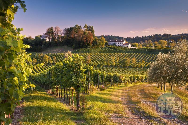 將丘陵挖成酒廠「MASOTTINA」,橄欖樹和葡萄藤共生的風景引人入勝。(MASOTTINA提供)