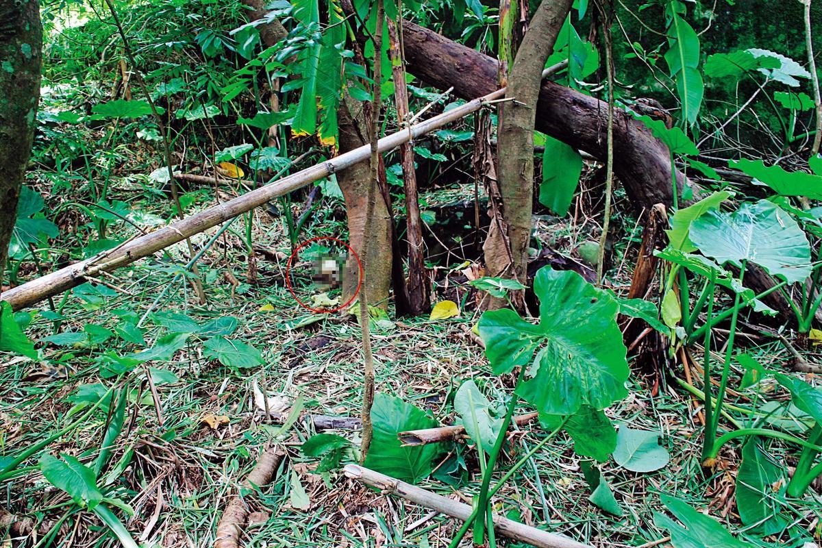 竹林中不僅有1顆骷顱頭(紅圈處),周邊還有21塊人骨。(翻攝畫面)