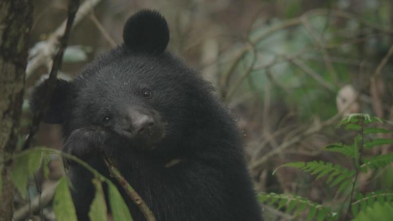 陳昇創作《黑熊來了》電影主題曲的靈感源自於南安小熊。(大麥影像傳播工作室提供)