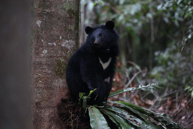 生態電影《黑熊來了》耗時11年拍攝,長時間紀錄導致拍攝成本增加。(大麥影像傳播工作室提供)