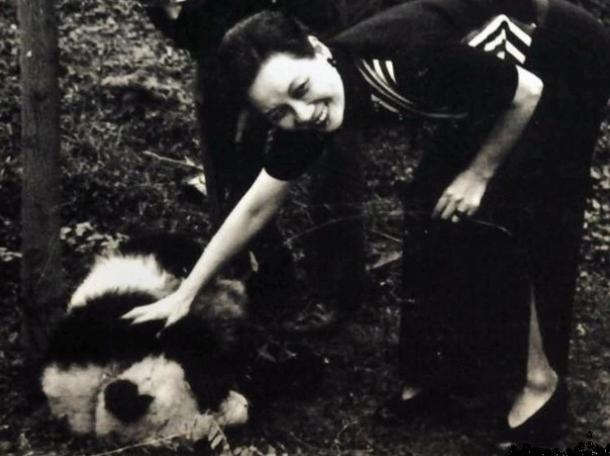 熊貓外交的歷史,最早可追溯回1941年,宋美齡和宋靄齡代表中華民國政府向美方贈送一對貓熊,以對其救濟二戰中的中國難民表示感謝。(翻攝自網路)