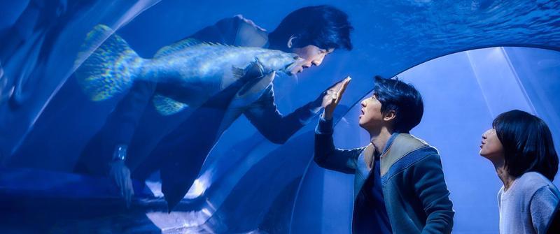 柯佳嬿(右)與傅孟柏(左)在《你的情歌》中譜出浪漫愛情故事。