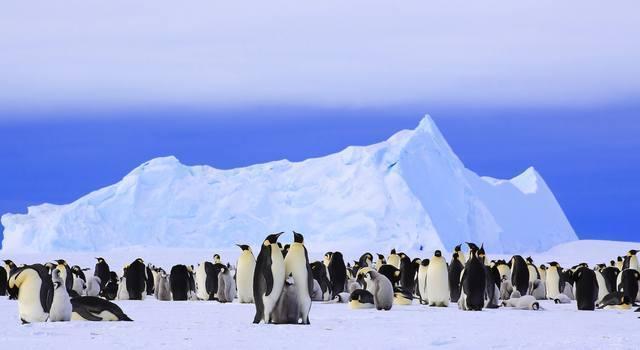 科學家9日於西摩島竟測到20.75度的高溫,此紀錄是南極氣溫有史以來首次突破20度。(翻攝自inverse.com)