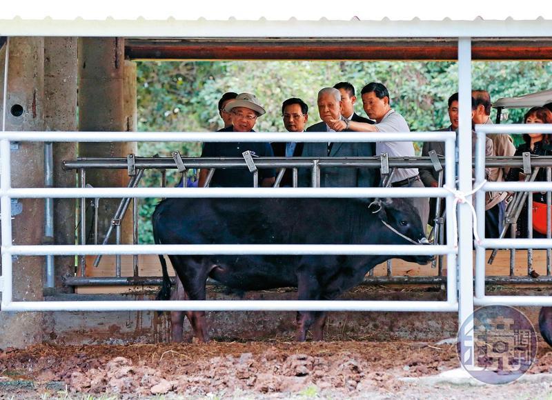 前總統李登輝購入原飼養在陽明山的黑毛牛,命名為「源興牛」,培育新牛種。圖為2017年李到花蓮源興牛欄舍關心培育進度。