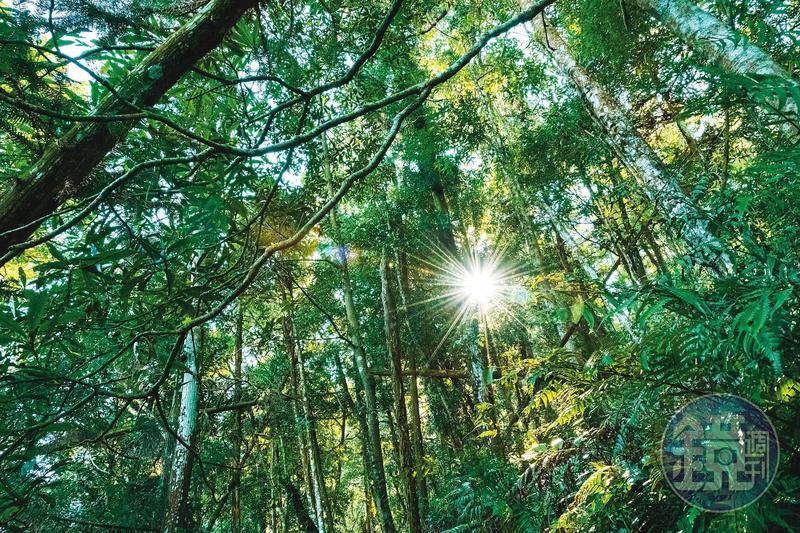 「仙洞步道」林相為茂密樹林,時而透進溫煦春陽。
