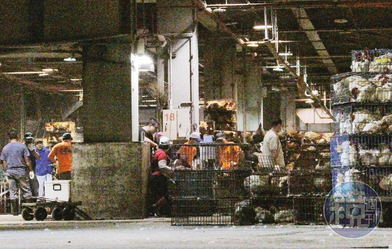 2/29 23:12 本刊直擊的這處屠宰場,由官方持股近半,每日共屠宰約5萬隻家禽。