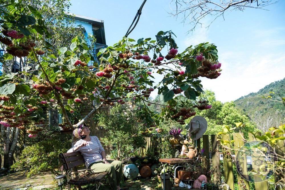 「非常鄉村小吃」老闆娘有空就愛在庭園中休息賞花。