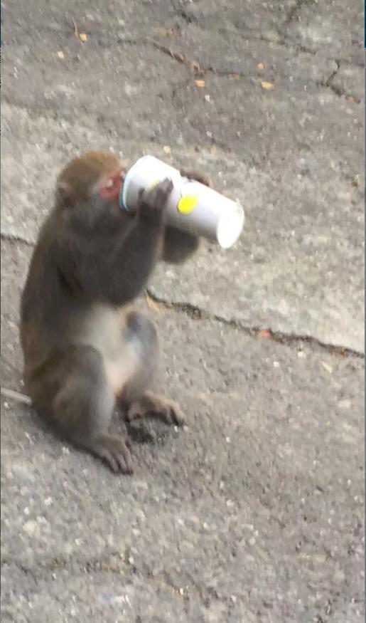 許多網友在評論區分享自己所拍下的偷食猴子。(翻攝自Dcard)