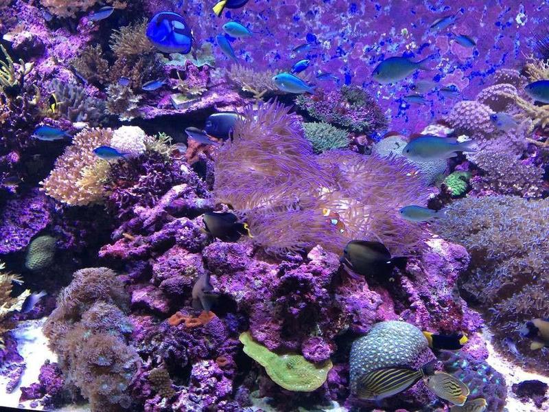 澳洲大堡礁的珊瑚礁群是珍貴的自然資產。(公視提供)