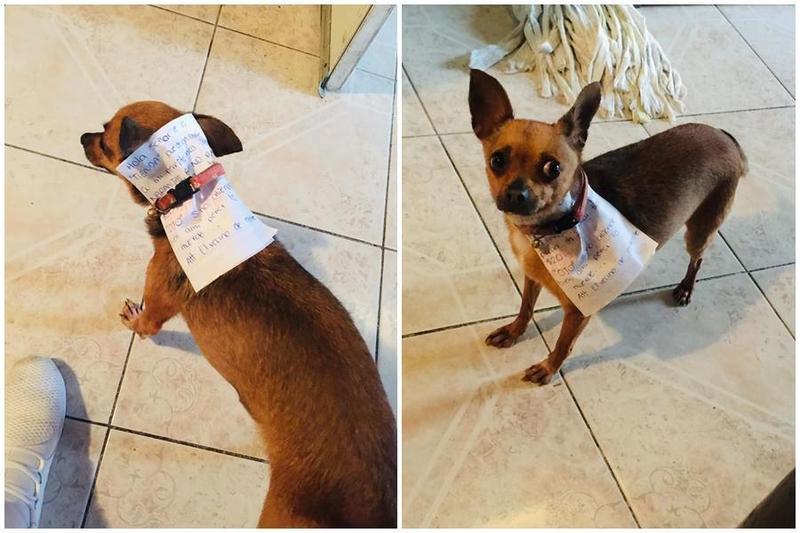 在墨西哥有民眾為了買包零食,竟出動家中愛犬。(翻攝自Antonio Muñoz臉書)
