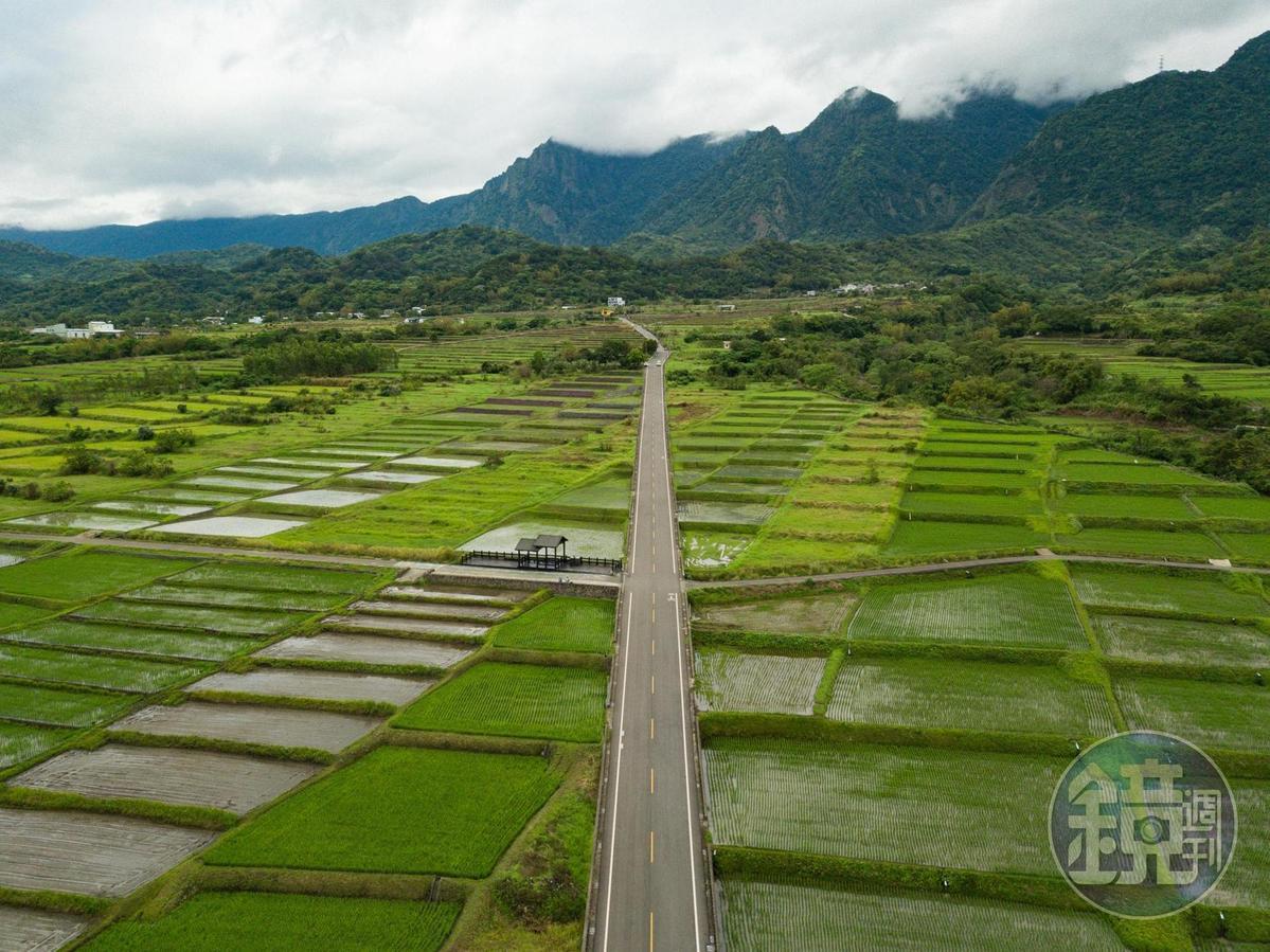 春天的金剛大道,兩側是綠油油稻田。