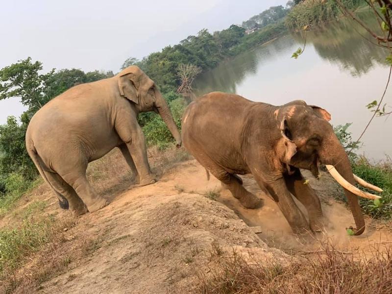武漢肺炎疫情重創泰國觀光業,連大象都成了受災戶。圖為示意圖。(翻攝自GTAEF Helping Elephants臉書)
