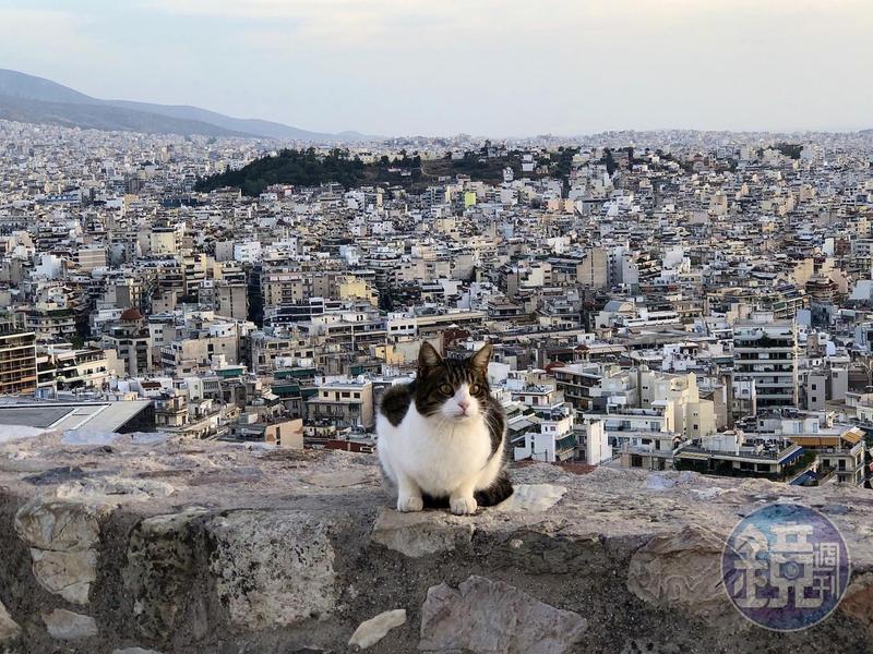 神廟裡的貓優遊自得,吸引許多遊客來拍照。