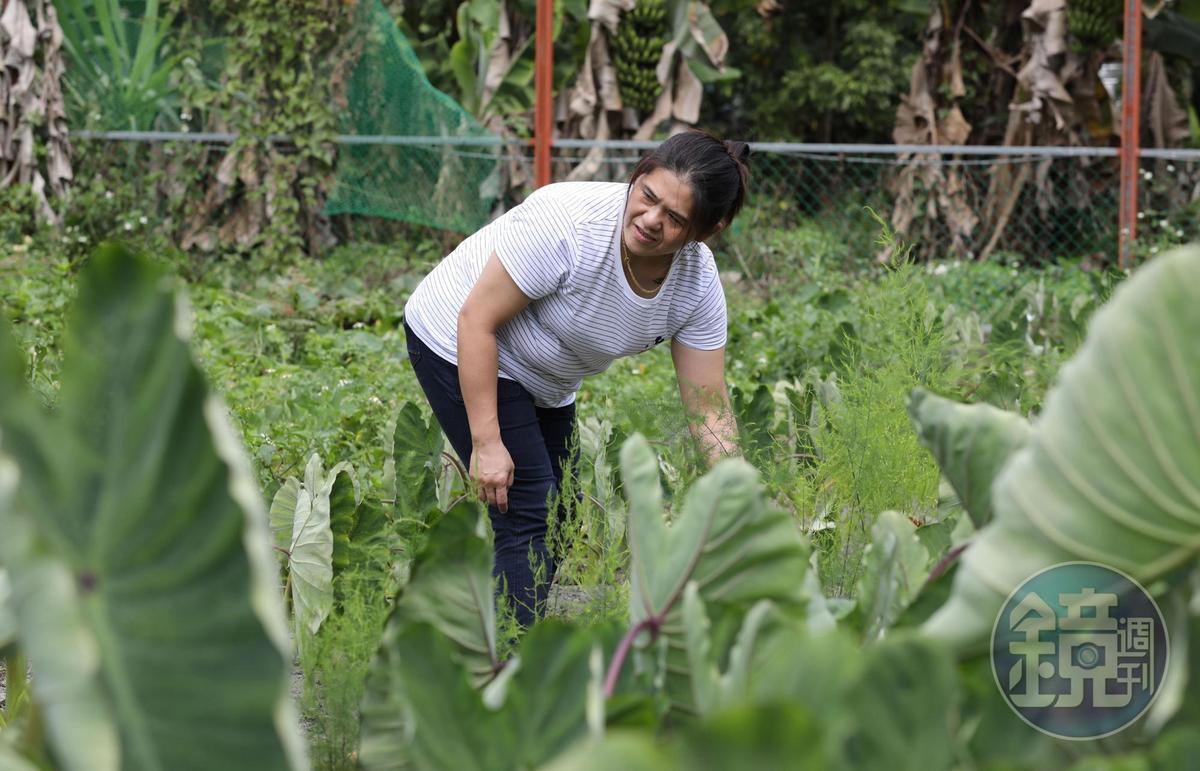 鄉下找工作不易,曾鈴君曾是西瓜田的農工,後來才覓得清潔隊員這份穩定正職,十分珍惜。