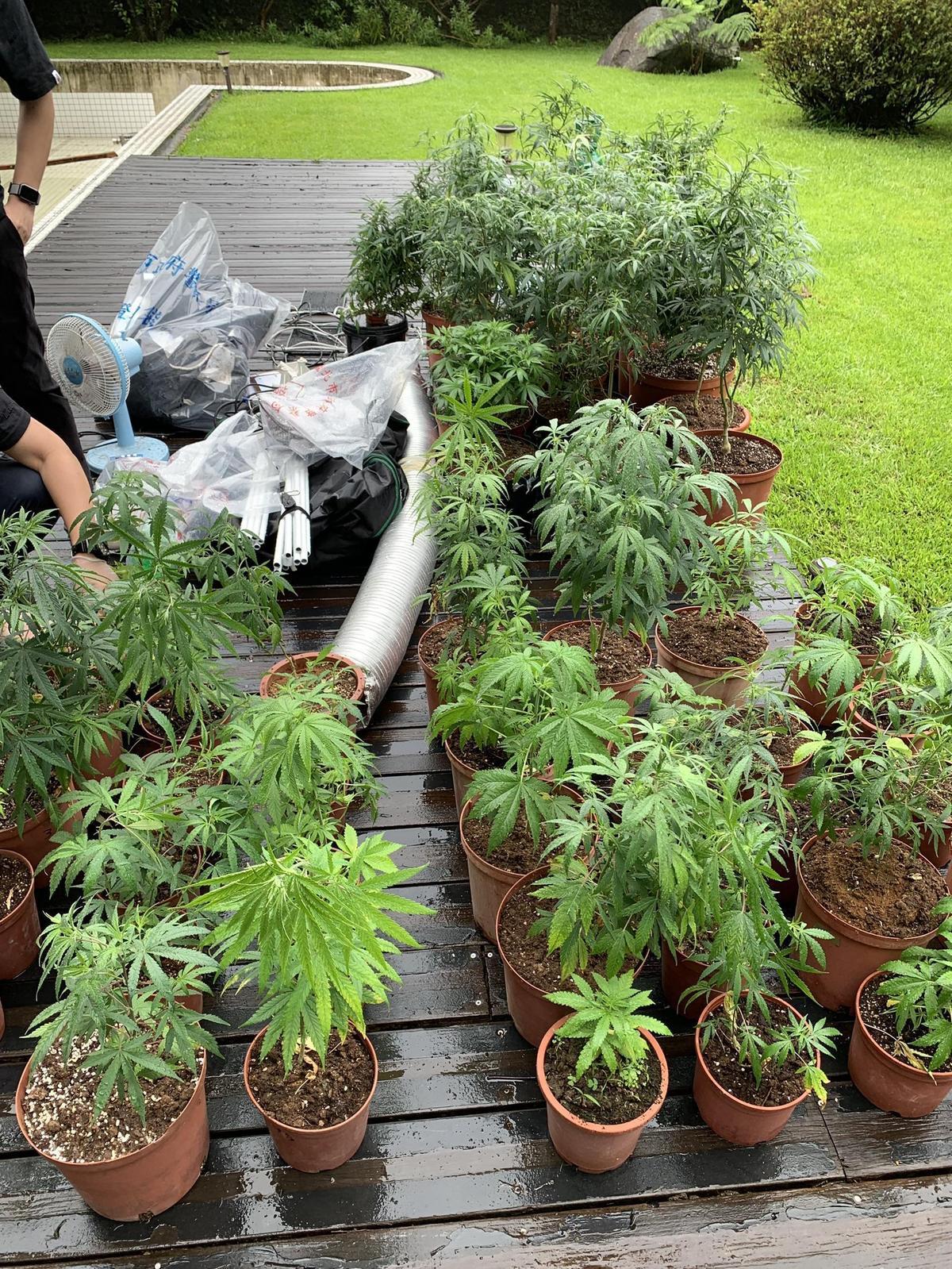王嫌在百坪別墅種植大麻。(翻攝畫面)