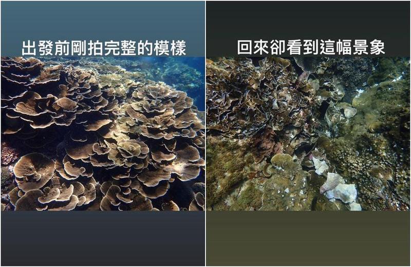 潛水員拍下珊瑚在被遊客踩踏前後的對比照片。(翻攝自PENNY 愛潛水粉絲專頁)