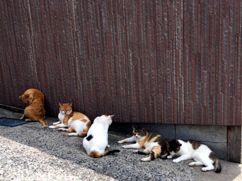 被稱為「貓之島」的馬島,曾是貓咪的無憂天堂。(翻攝特定非営利活動法人SCAT 粉絲專頁)