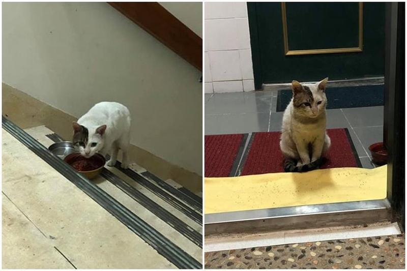 被遺棄的浪貓「黑尾」,每天爬20樓向飼主討食物。(翻攝自臉書)