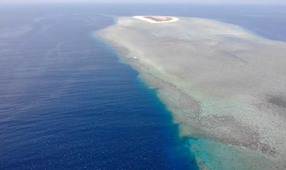 澳洲雷恩島是世界上最大的海龜聚集地。(Great Barrier Reef Foundation)