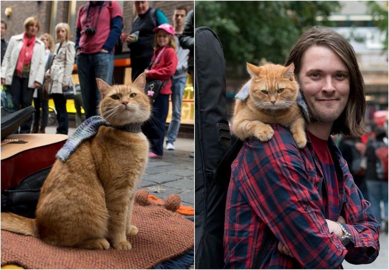 詹姆斯與BOB相遇的故事相當感人,如今BOB的真正死因也曝光。(翻攝自A Streetcat Named Bob臉書)