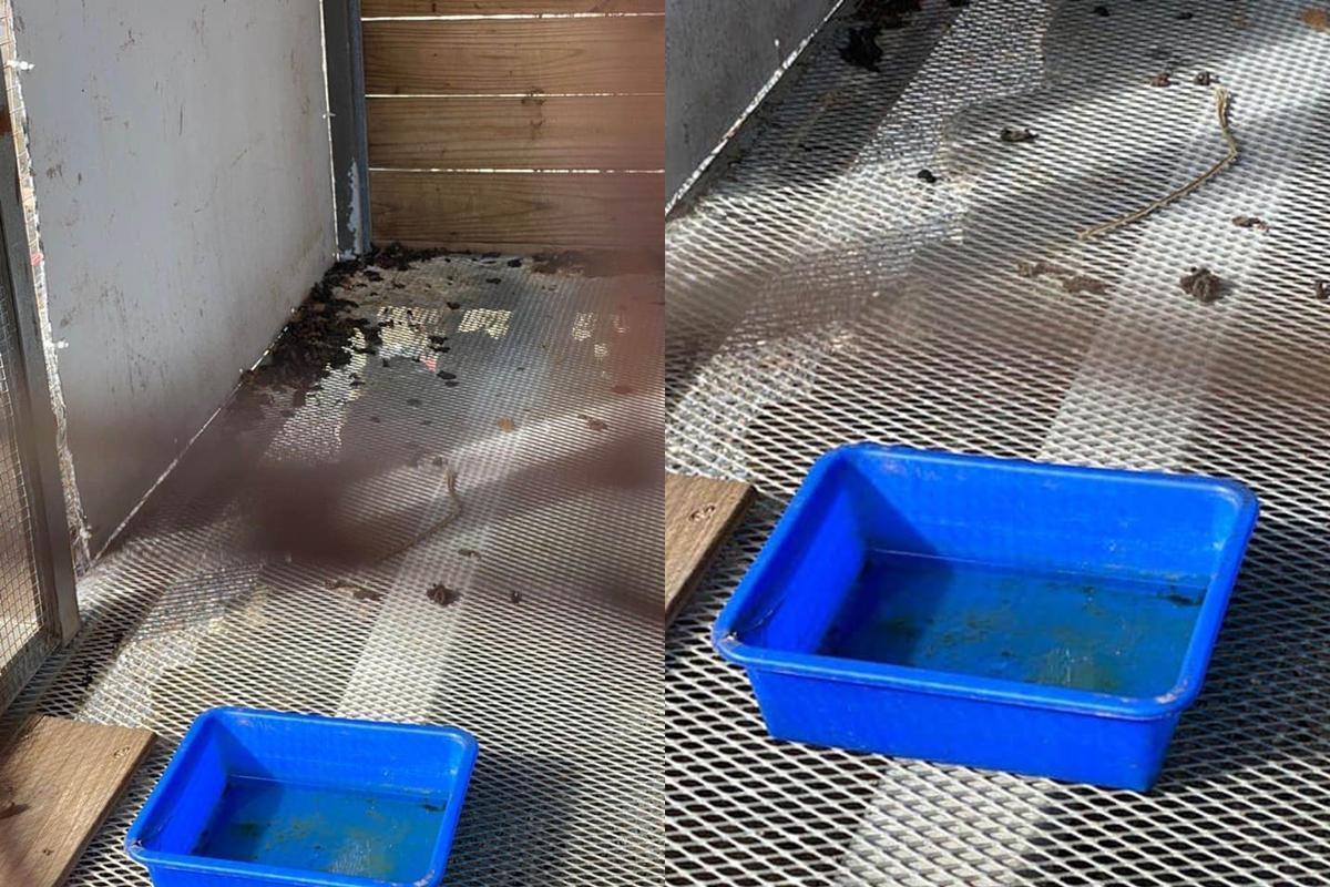 民眾指控屏東墾草趣親子園區不當飼養動物,雪貂籠內環境髒亂。(翻攝自臉書社團「小貂幼稚園」)
