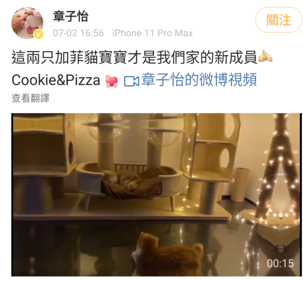 章子怡在微博貼出愛貓影片,表示牠們才是家中新成員,否認懷孕。(翻攝自章子怡微博)