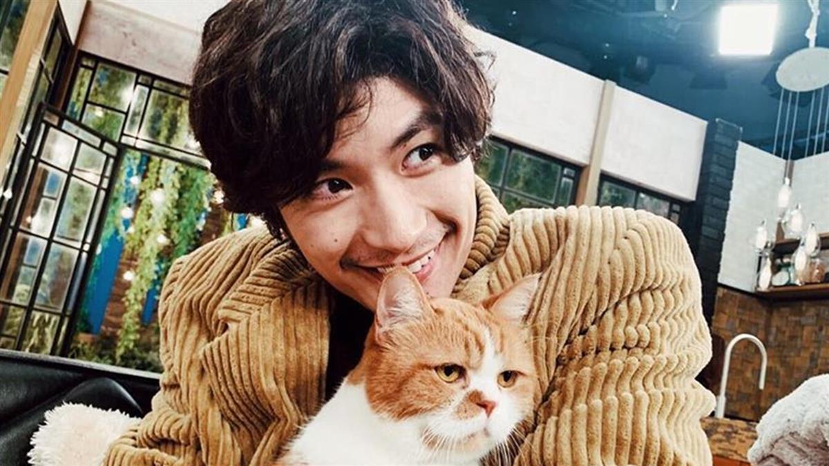 三浦春馬抱著貓的暖男形象,只能永留心中回憶了!(翻攝自網路)