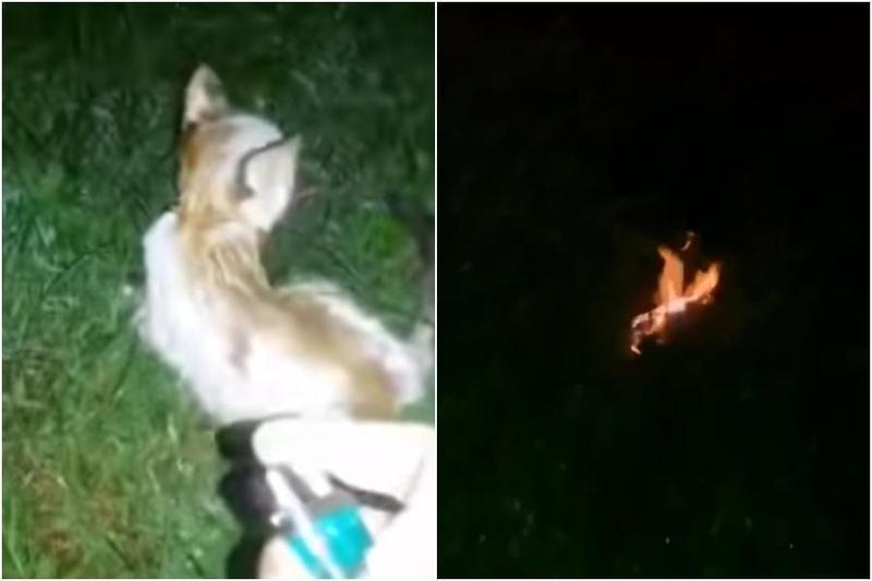 一隻幼貓全身被潑灑汽油後點火燃燒,最後被活活燒死。(翻攝臉書Persatuan Haiwan Malaysia - Malaysia Animal Association)