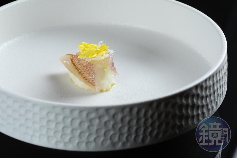 東北角的春子鯛與絲綢乳酪,是壽司芳主廚中之上公起在台灣獨家的創意菜。