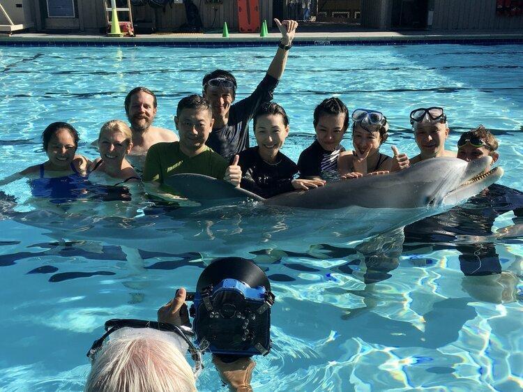 受試者一致認為海豚栩栩如真,外型、觸感、動作都沒有破綻。(翻攝Edge Innovations官網)