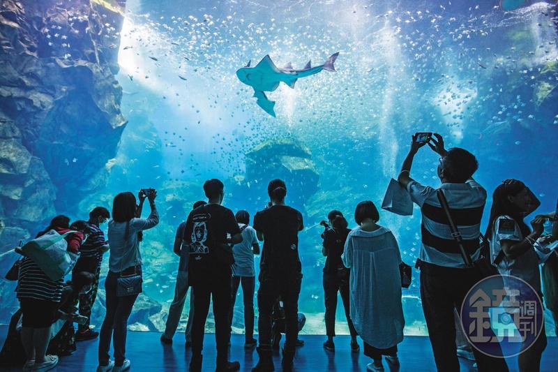 一踏進Xpark,會看到挑高8公尺、寬12公尺的露天大水槽,內有超過6,000隻銀鱗鯧漫游。