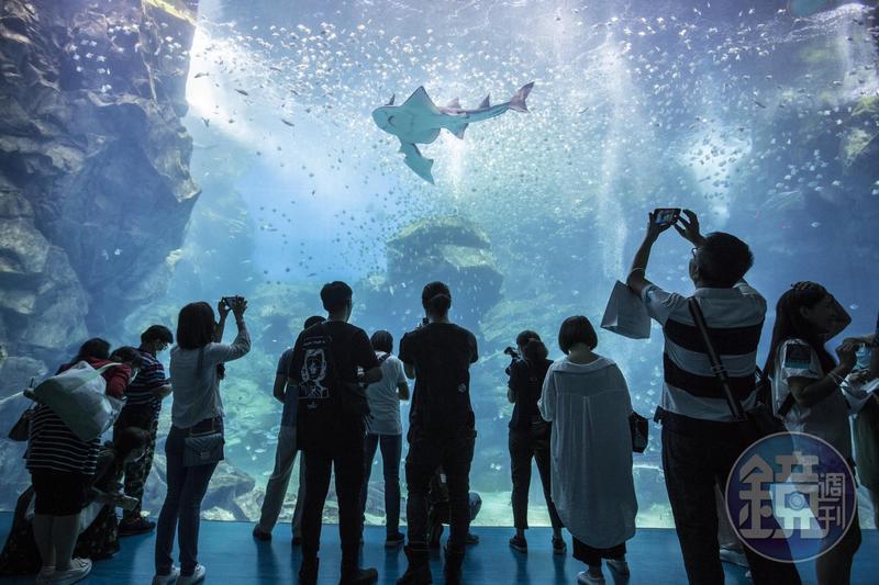 蔡宗翰喜歡魚,這次乾脆和日本西武集團合作,在台推出最美水族館Xpark。