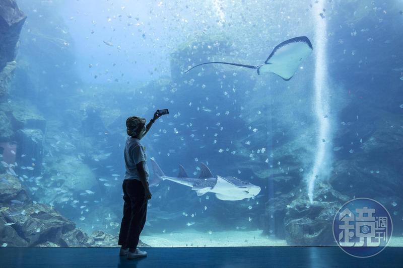 一踏進Xpark就會看到挑高8公尺、寬12公尺的露天大水槽,內有超過6000隻銀鱗鯧漫遊海底。