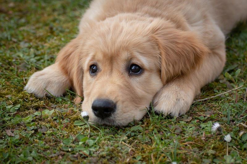 金正恩指養狗是資本主義的行為,下令禁止。(示意圖/Pixabay)