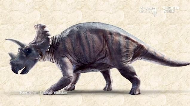 加拿大研究團隊發現,距今7600萬年前的尖角龍恐龍腿骨罹患惡性癌症,成為已知首例。(翻攝自麥馬斯特大學影片)