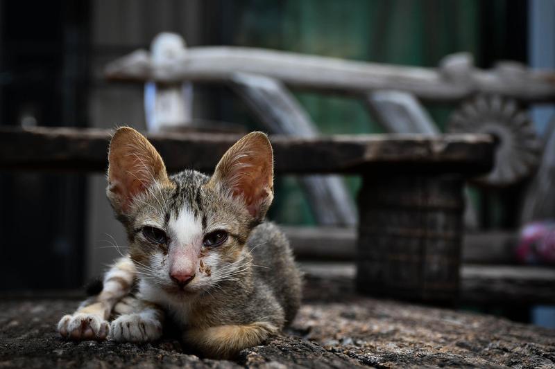 曾姓男子涉嫌領養貓狗後虐待致死,甚至還利用同情心募款斂財。(示意圖/Pixabay)