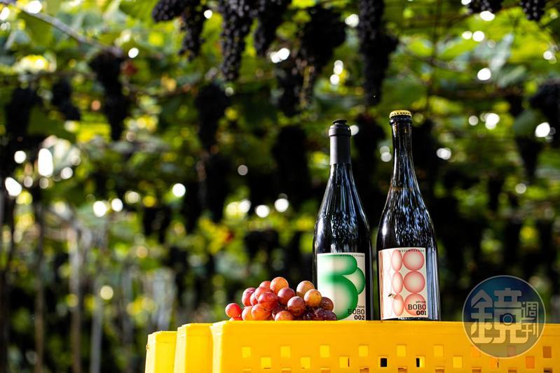 威石東酒莊今夏推出實驗性濃厚、加入巨峰、蜜紅葡萄的「BOBO」系列。