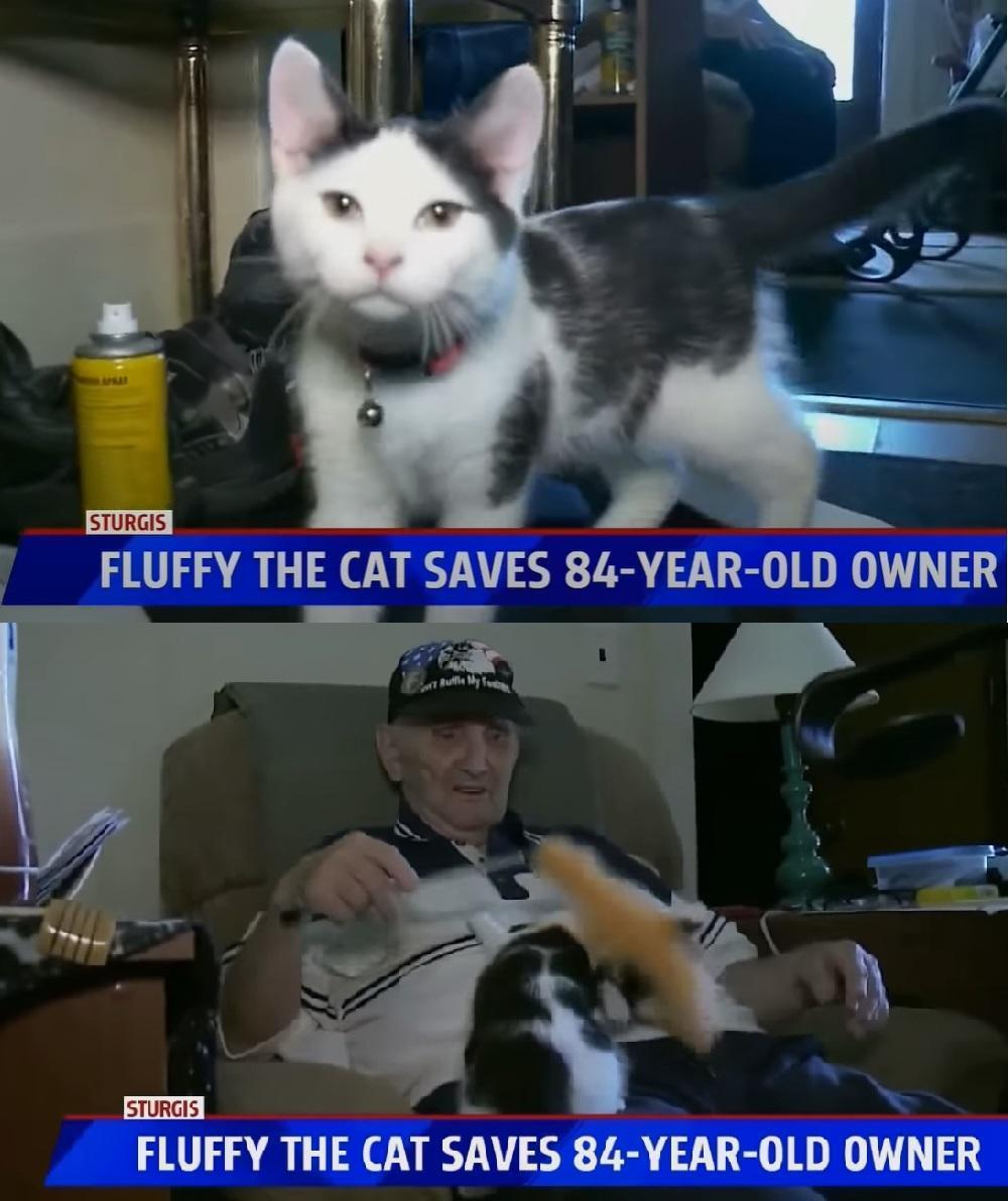 威廉在浴室跌倒受困長達16小時,最後是愛貓毛毛救了他。(翻攝自FOX 17 WXMI YouTube)