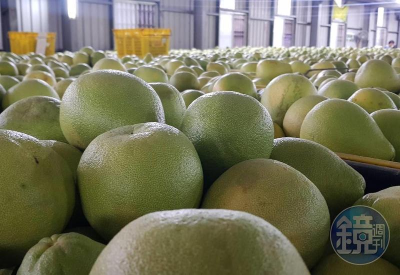 農委會希望內外銷雙管齊下,能幫助柚子維持在很好的市場價格。