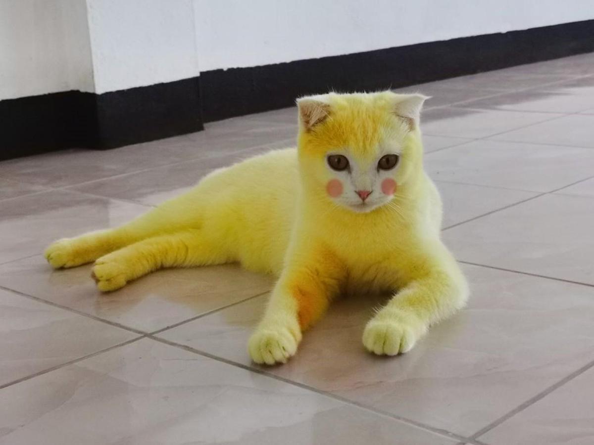 沒想到白貓變黃貓,亮度還有點高。(翻攝薩巴馬FB)