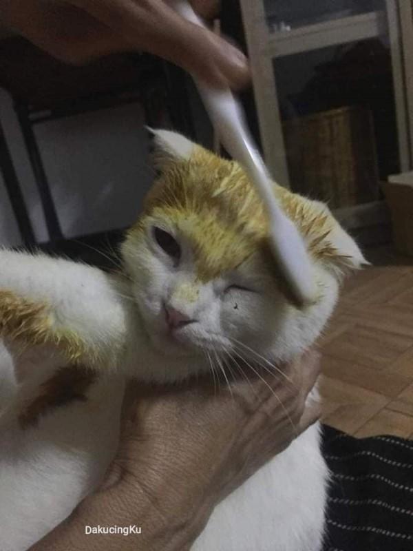 主人突發奇想用薑黃治療。(翻攝薩巴馬FB)