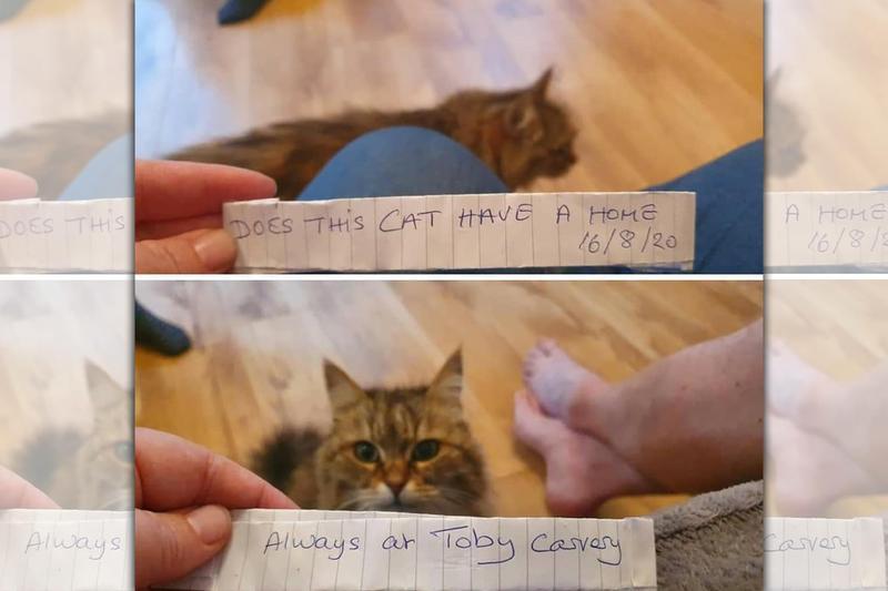 每天出門溜搭的貓咪圖拉,某天帶著紙條回家,讓雙面生活曝了光。(IG@tula_queencat)