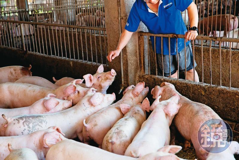 政府將成立百億養豬產業基金,降低進一步開放美豬後對豬農的衝擊。
