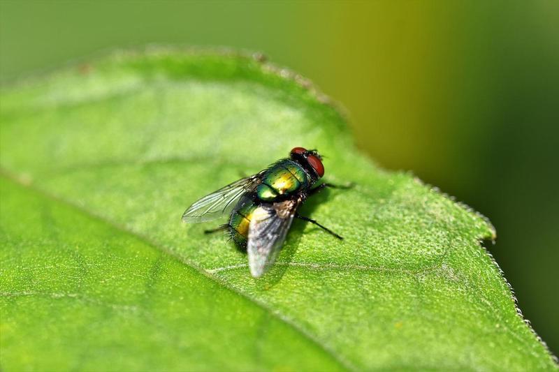 為了追打蒼蠅而引起的氣爆案。(示意圖,Pixabay)