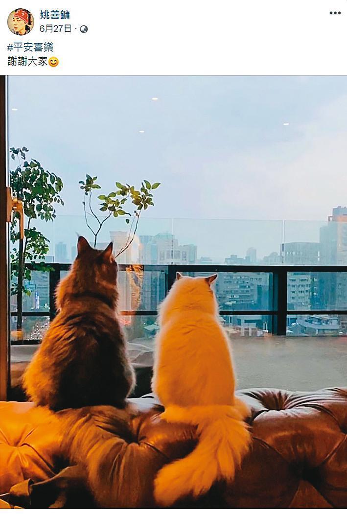 阿妹與Sam在台北市中心的豪宅裡養了2隻貓咪。(翻攝自姚善鏞臉書)