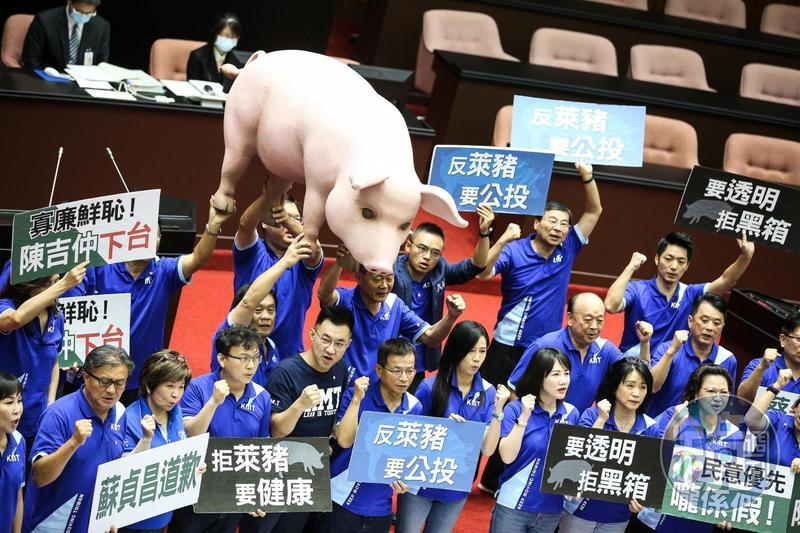 國民黨團抬出自製的「台灣豬」公仔模型等道具抗議美牛美豬進口。