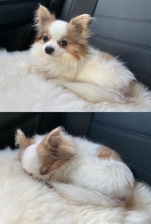 子瑜的愛犬酷吉於昨日去世。(翻攝TWICE IG)