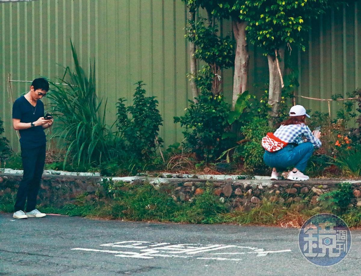 10月4日17:20,謝忻突然跑到路邊的花圃,蹲下拍攝路邊野花。
